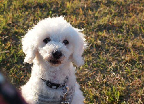 公園で遊ぶ老犬