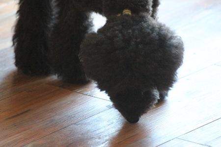 床を舐める犬