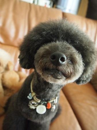 ぬぼーとした犬