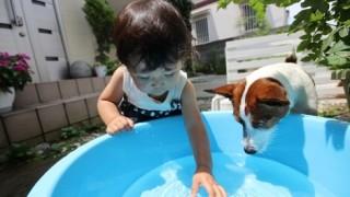 子犬と子供の水遊び