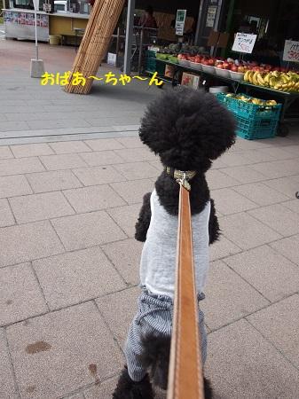 2足歩行する犬