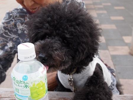 水滴を舐める犬