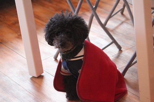 赤色に守られる犬
