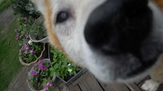 目の周りが痒い犬