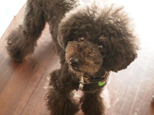 可愛い表情をする犬