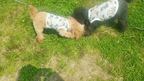 草を食べる犬達