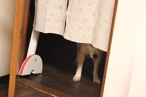 覗き見する老犬