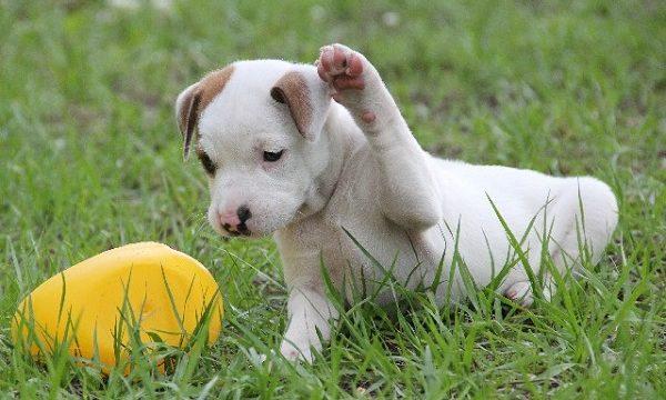 公園で遊ぶ子犬
