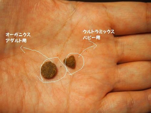 粒の大きさと形の比較