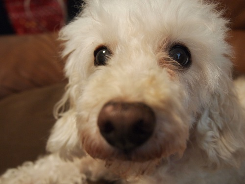 変わった性格の犬