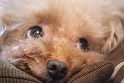 興味津々の顔をした犬