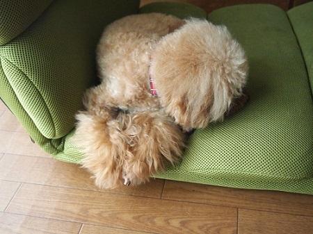 座椅子で眠る犬