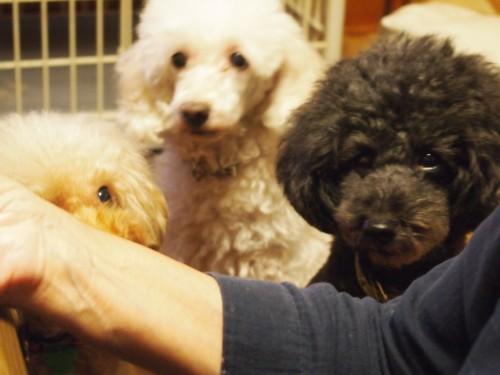 食べ物をガン見する犬達