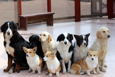 沢山の犬達