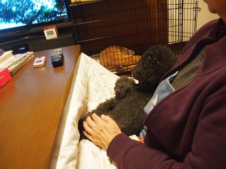 おばあちゃんとテレビを見る犬