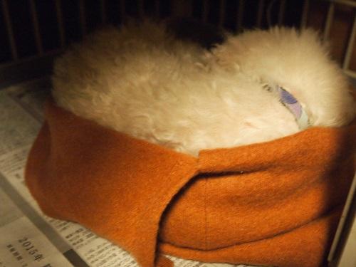 丸めたセーターと犬
