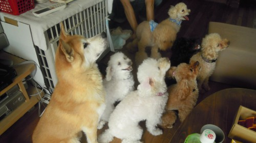 犬の大家族