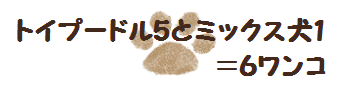 トイプードル5とミックス犬1!老犬&多頭飼いライフ真っ最中!