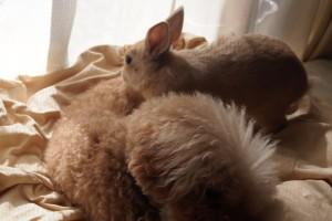 犬の背中によじ登るウサギ