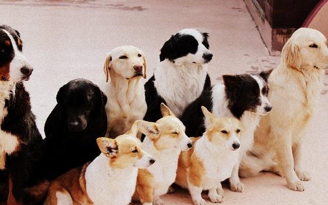 沢山の大型犬