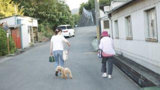 トイプードルの散歩