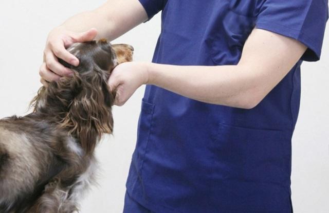 獣医の診察