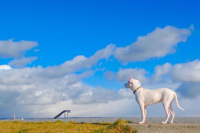 雲と白い犬
