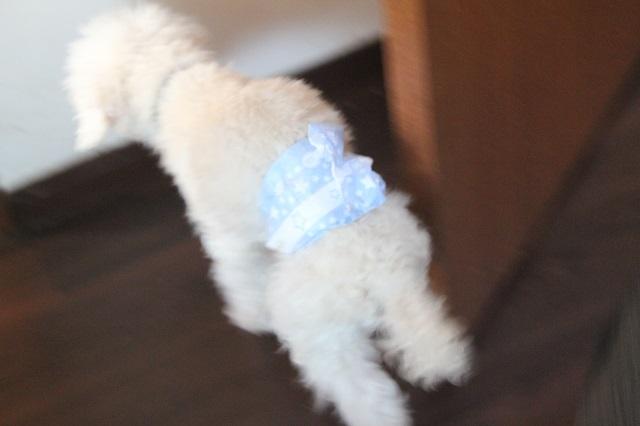 紙おむつの老犬