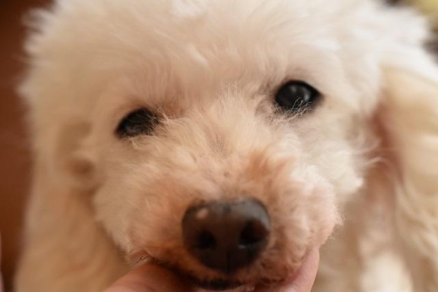 災害時にペットと避難する!でも老犬と一緒の避難はなかなか厳しい